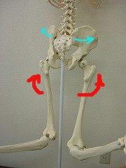 開いた骨盤